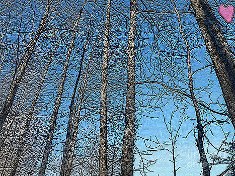 Hickory Trees in Winter by Patricia Keller
