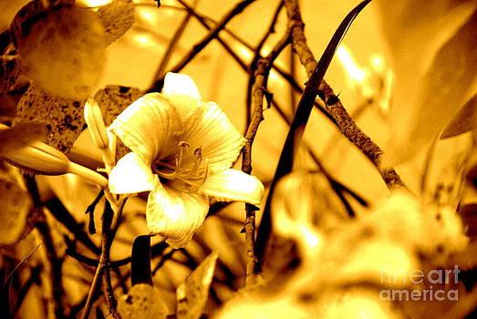 Hidden Flower by Alex Blaha