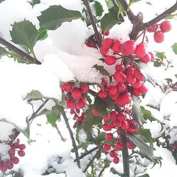 Hidden Holly Berries by Anastasia Pleasant