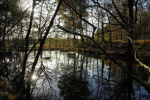 Hidden pond by Erik Tanghe