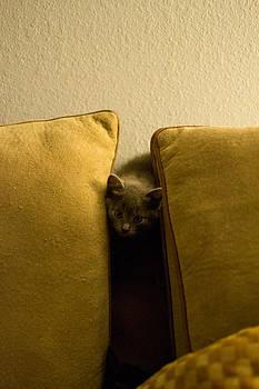 Hide and Seek by Matt Radcliffe