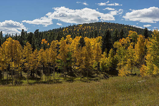 High Country Aspens by Linda Storm