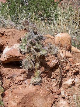 High Desert Cactus by Sherry Vance
