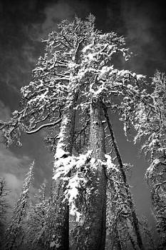 High Hopes Black and White by Chris Brannen