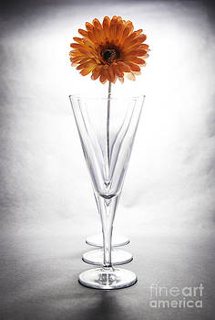 Nigel Jones - High Key Flower In A Glass