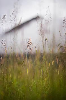 Highland Dew by Arianna Petrovan