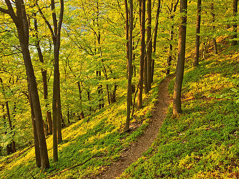 Hiking trail through an oak forest by Martin Liebermann