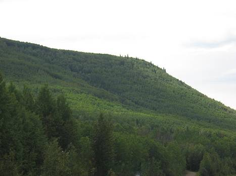 Hill Of Trees by Gordon Wunsch