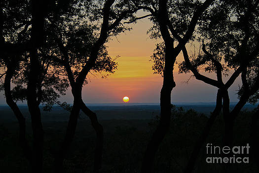 Hilltop Sunset by Diana Black