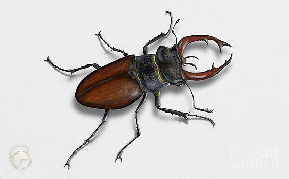Hirschkaefer - vacaloura escornabois - ekoxe ekoxehane - vliegend hert - Eghjort - Lucanus cervus by Nature-Interpretation-Panels - Naturlehrtafeln - Schautafeln Maassen-Pohlen