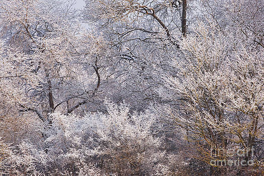 Hoarfrost abstract by Julian Elliott