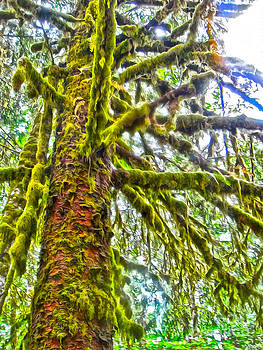 Gregory Dyer - Hoh Rainforest - Moss tree
