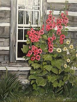Hollyhocks by Connie Rowsell