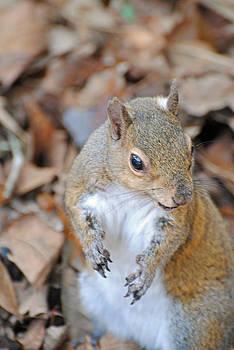 Jeff Brunton - Homosassa Springs Squirrel 2