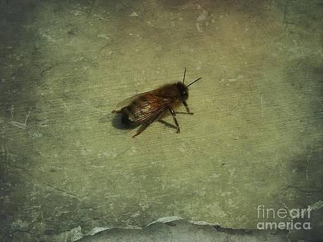 Honey Bee by Kristine Nora
