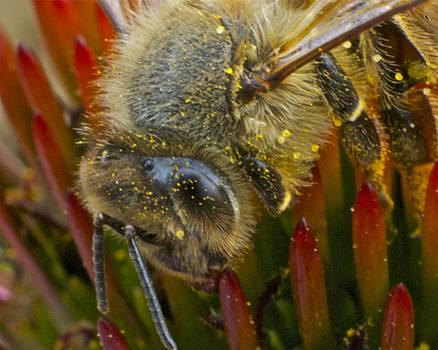 Michael Peychich - Honey bee Profile