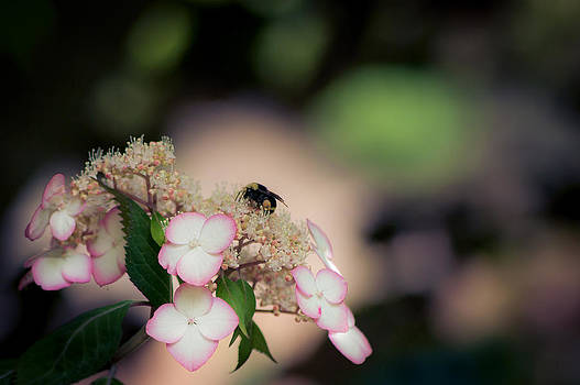 Honey Just Bee by Jen Baptist