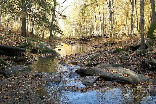 Honey run stream by Bill Dinkins