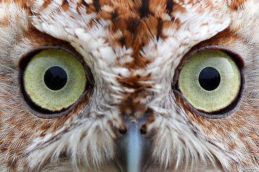 Hoo Is Watching You by David Yunker