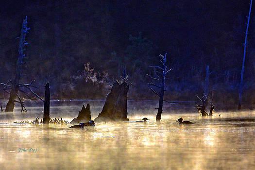 Hooded Mergansers at Frosty Sunrise by John Stoj