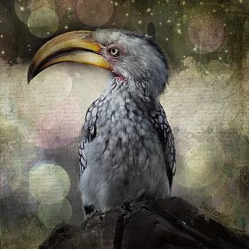 Hornbill by Barbara Orenya