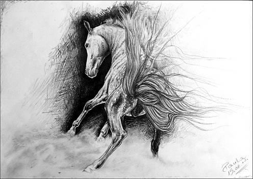Horse . by Paula Hajduk