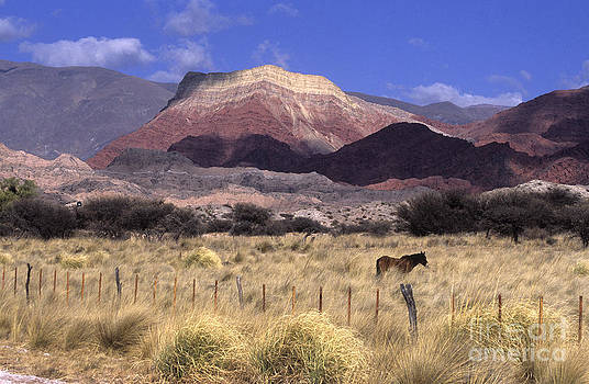 James Brunker - Horse and Cerro Yacoraite Argentina