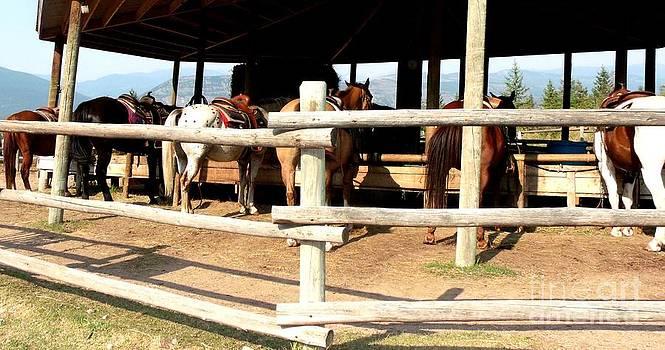 Gail Matthews - Horse Back Riding