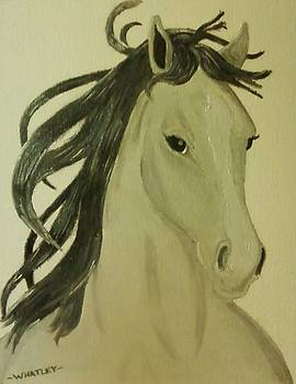 Horse Beauty by Dominic Whatley