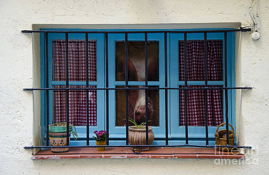 Horse behind the window by Victoria Herrera