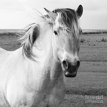 Horse Black and White by Sara  Meijer