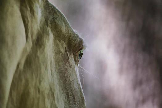 David Letts - Horse
