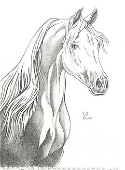 Horse by Florina Petre