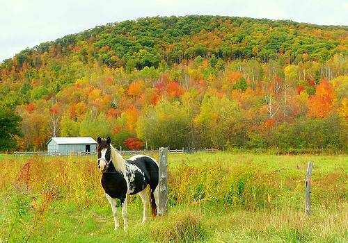Horse in Autumn Field by Elaine Franklin