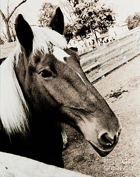 Jeanette K - Horse
