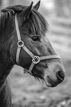 Martina Fagan - Horse