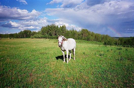 Horse Named Bee by Gordon Wunsch