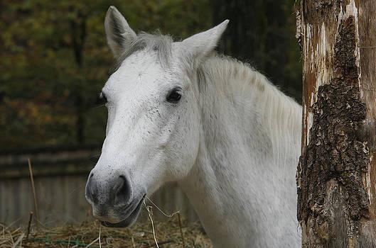 Horse by Nina Peterka