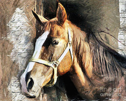 Horse Portrait - drawing by Daliana Pacuraru