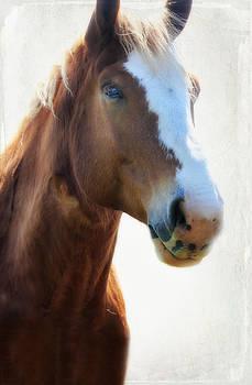 Horse Power by Joan Bertucci