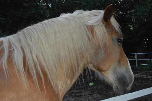 Horse Profile by Cim Paddock