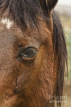 James BO  Insogna - Horse Tear
