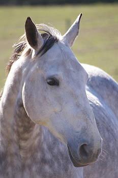 Horse  by Tom Salt