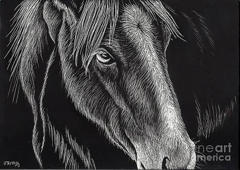 Horse Up Close by Jennifer Jeffris