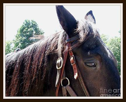 Gail Matthews - Horse wth no name