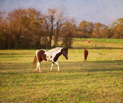 Kim Hojnacki - Horseplay