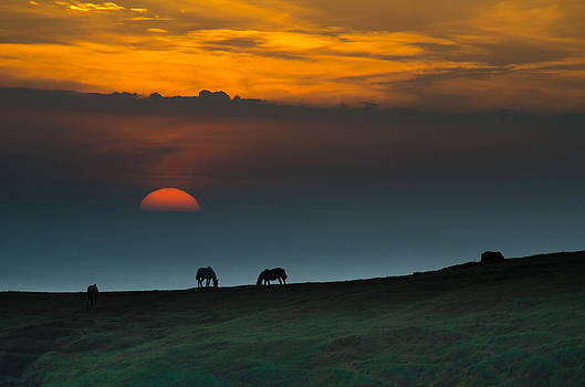 Horses at Sunset by William Shevchuk