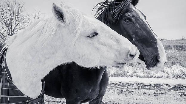 Horses Harwyn and Jack by Toni Thomas