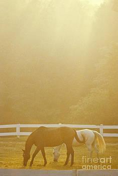 Frederica Georgia - Horses In Pasture