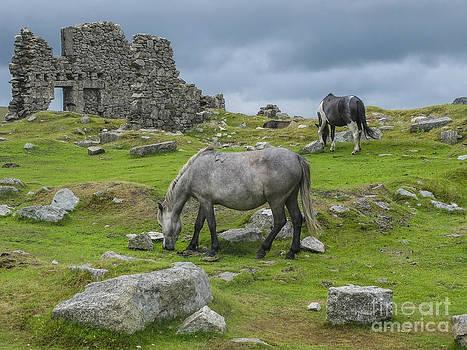 Patricia Hofmeester - Horses on the moors of Dartmoor